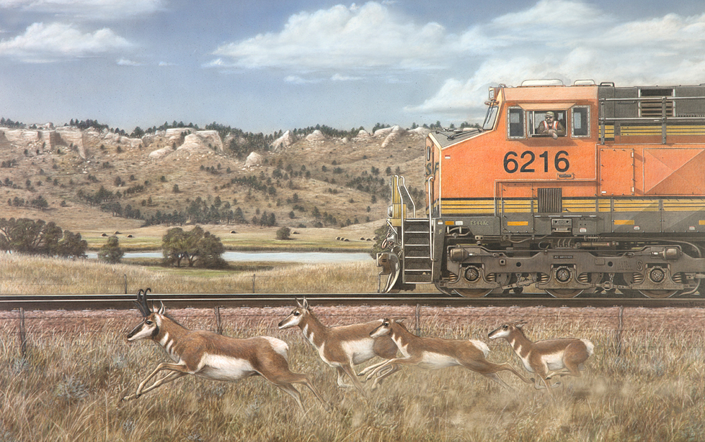 """Rail Runners<br>Pronghorn Antelope The conductor of the 6216 gets front row seats to a band of pronghorns testing their speed prowess."